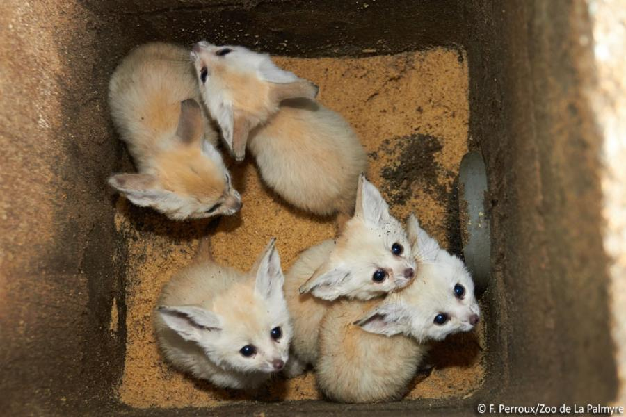 images of baby foxes